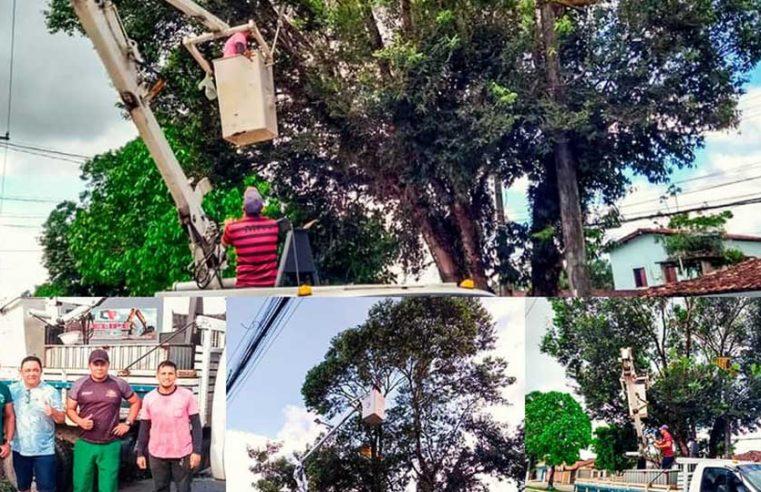 Remoção de árvores em risco de queda.