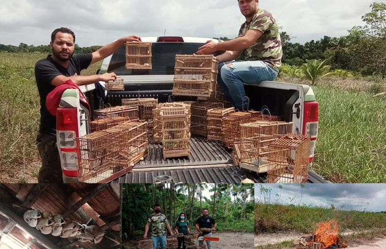 Repressão à caça e venda ilegal de pássaros silvestres.